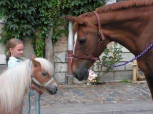 Poney et cheval avec un enfant au parc du héron
